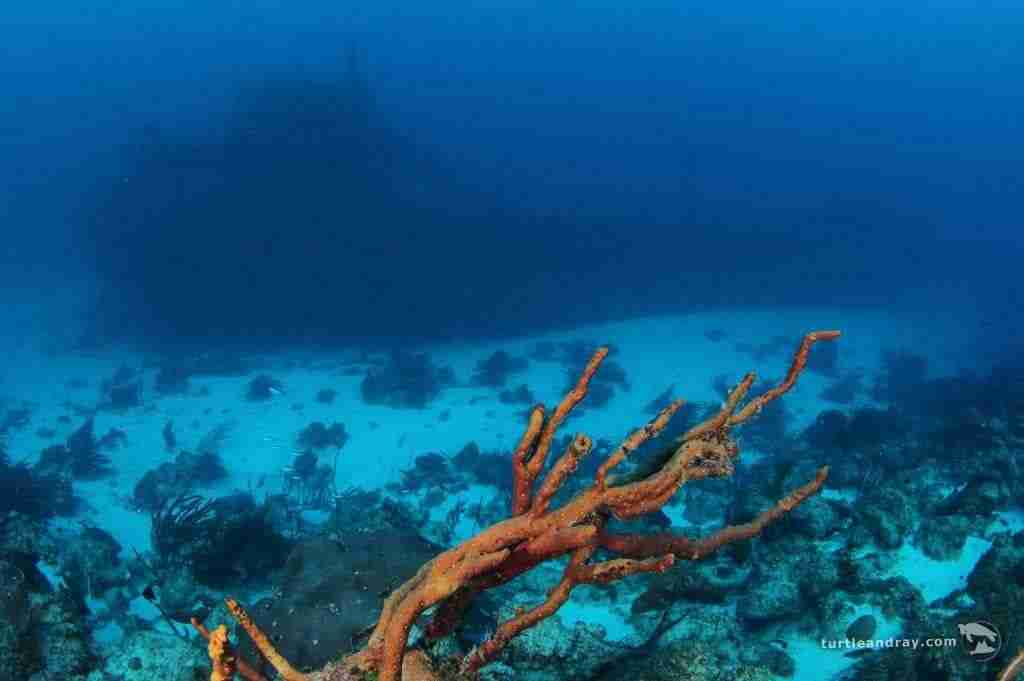 Curacao Dive Site Guide | Superior Producer Shipwreck | Dive Curaçao