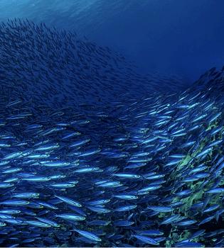 Scuba Diving Curacao | Top 10 Reasons to Dive Curacao