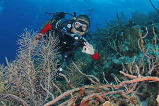 Curacao Dive Industry Celebrates 2019 | Dive Travel Curacao