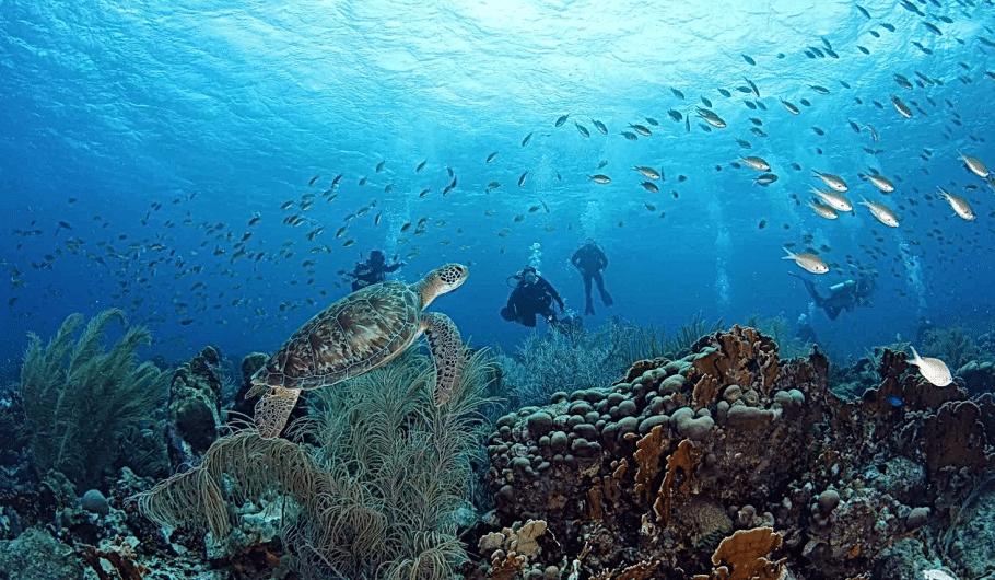 Duiken Curacao | Duikreizen Curaçao