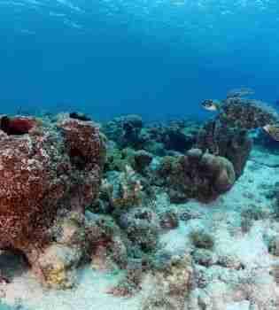 Playa Manzalina   Curacao Diving Guide   Dive Travel Curacao