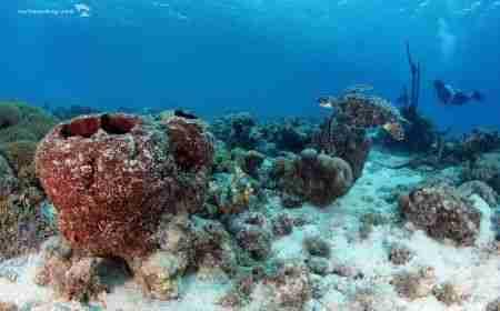 Playa Manzalina | Curacao Diving Guide | Dive Travel Curacao