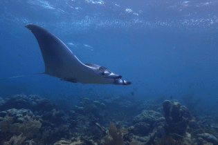 Best Dive Sites of Eastern Curaçao | Dive Travel Curacao | Dive Curaçao