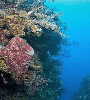 Curacao Dive Site Guide   Black Coral Garden   Dive Curaçao