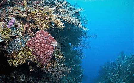 Curacao Dive Site Guide | Black Coral Garden | Dive Curaçao