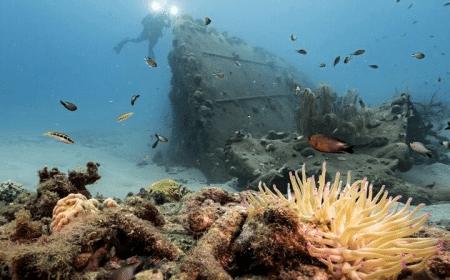 Curacao Dive Site Guide | Black Sand Beach | Dive Curaçao