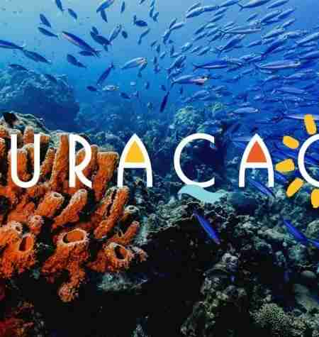 Changes in Curacao's Fish Population | Dive Curacao