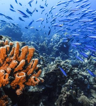 Playa Kenepa Klein Knip   Curaçao Dive Site Guide   Dive Travel Curacao