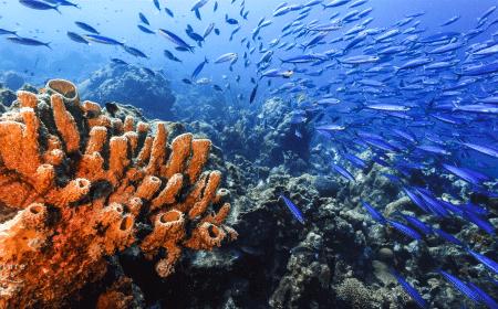 Playa Kenepa Klein Knip | Curaçao Dive Site Guide | Dive Travel Curacao