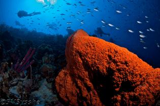 Curacao Dive Site Guide | Kortape Dive Site | Dive Curaçao