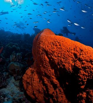 Curacao Dive Site Guide   Kortape Dive Site   Dive Curaçao
