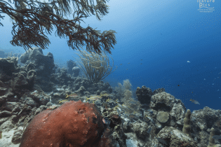 Makos Mountain | Curaçao Dive Site Guide | Dive Travel Curacao