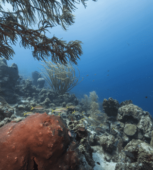 Makos Mountain   Curaçao Dive Site Guide   Dive Travel Curacao