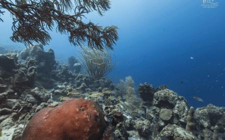 Makos Mountain | Curaçao Dive Site Guide | Dive Travel Curacao