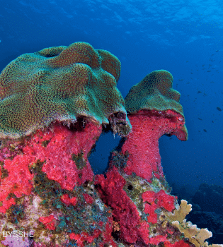 Curacao Dive Site Guide   Mushroom Forest
