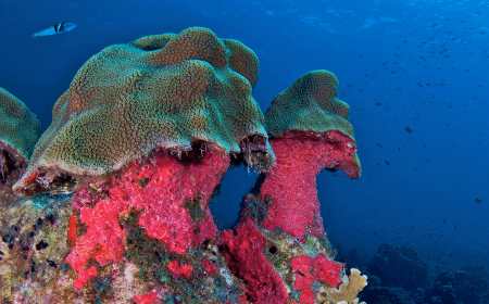 Curacao Dive Site Guide | Mushroom Forest
