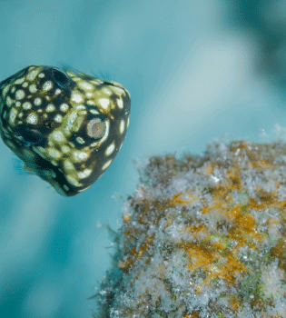 Curacao Dive Site Guide   REDIHO   Dive Curaçao