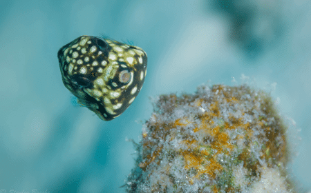 Curacao Dive Site Guide | REDIHO | Dive Curaçao