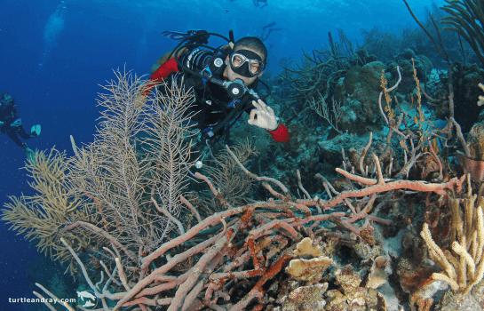 Ocean Encounters Curacao | Diving Retail Shop | Dive Curaçao