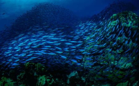 Curacao Dive Site Guide | Watamula South | Dive Curaçao
