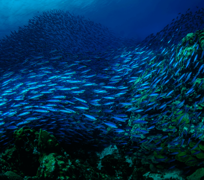Curacao Dive Site Guide   Watamula South   Dive Curaçao