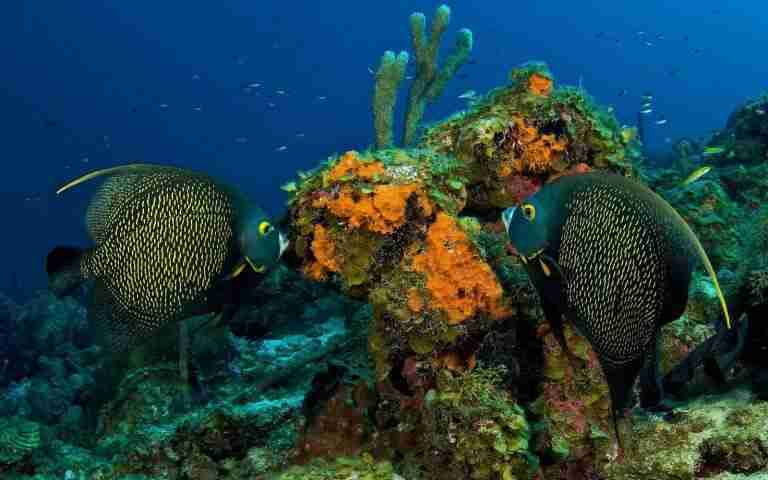 Curacao Dive Site Guide | Watamula North | Dive Curaçao