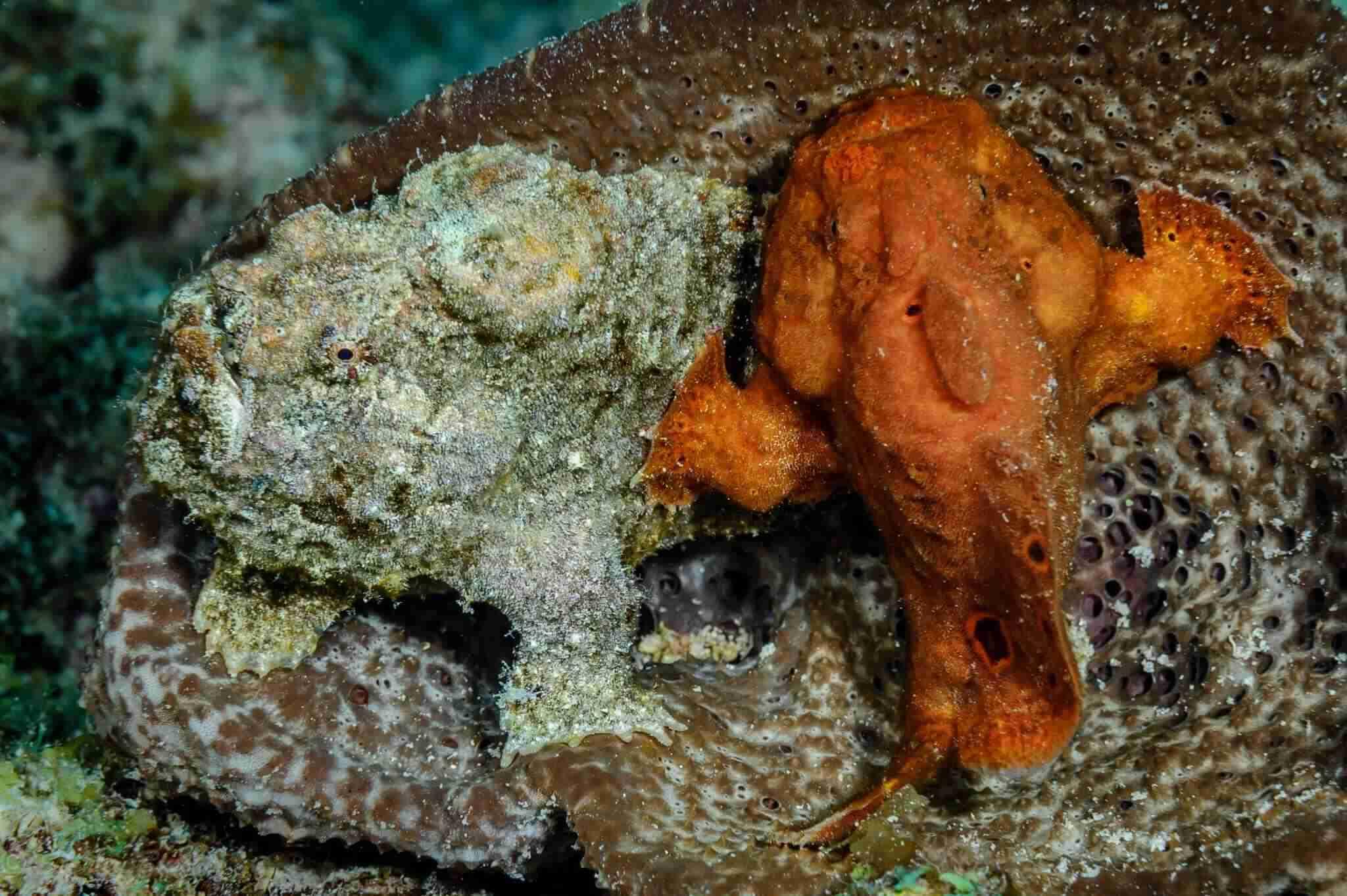 Playa Hulu | Curaçao Dive Site Guide | Dive Travel Curacao