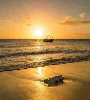 Curacao Dive Site Guide   Cas Abou   Dive Curaçao