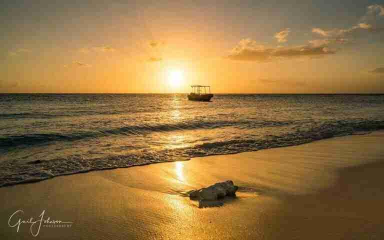 Curacao Dive Site Guide | Cas Abou | Dive Curaçao