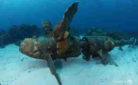 Curacao Dive Site Guide | Shipwreck Point | Dive Curaçao