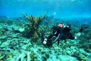 Shore Diving in Curacao | Dive Travel Curacao