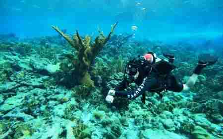 Shore Diving in Curacao   Dive Travel Curacao