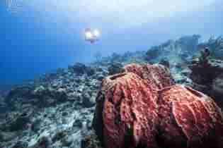Curacao Dive Site Guide | Daaibooi | Dive Curaçao