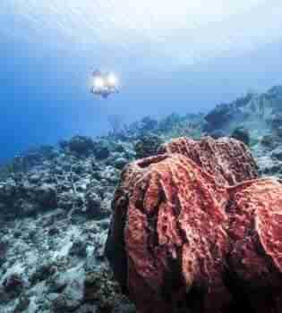 Curacao Dive Site Guide   Daaibooi   Dive Curaçao