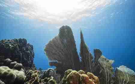 Barracuda Point | Curaçao Dive site Guide | Dive Travel Curacao