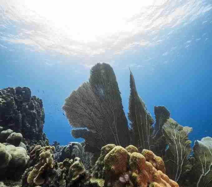Curacao Dive Site Guide   Barracuda Point   Dive Curaçao