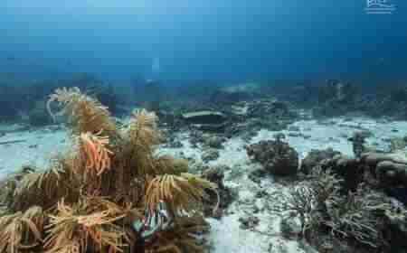 Elvin's Plane Wreck | Curaçao Diving Guide | Dive Travel Curacao