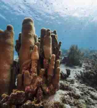 Curacao Dive Site Guide   Playa Hundu   Dive Curaçao
