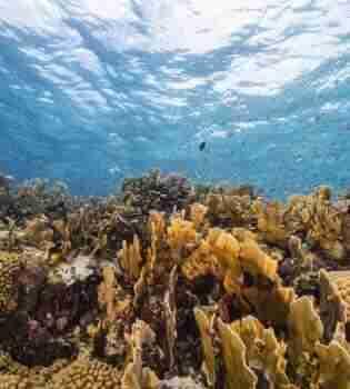 Playa Largu   Curaçao Diving Guide   Dive Travel Curacao