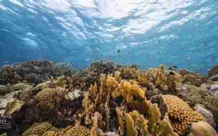 Playa Largu | Curaçao Diving Guide | Dive Travel Curacao