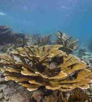 Playa Shon Mosa   Curacao Diving Guide   Dive Travel Curacao