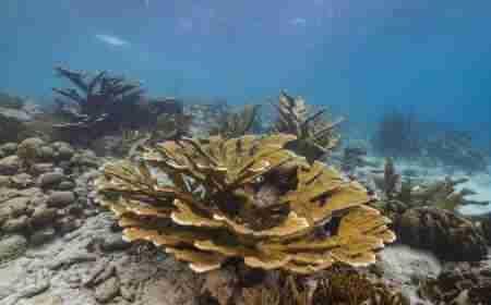 Playa Shon Mosa | Curacao Diving Guide | Dive Travel Curacao