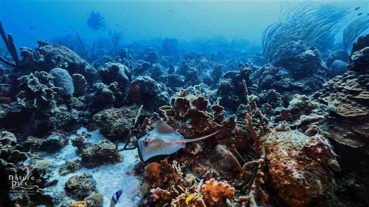 Sponge Forest | Curaçao Dive Site Guide | Dive Travel Curacao