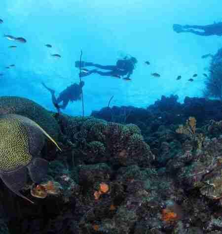 Curacao Shore Diving | A Unique Caribbean Haven | Dive Travel Curacao