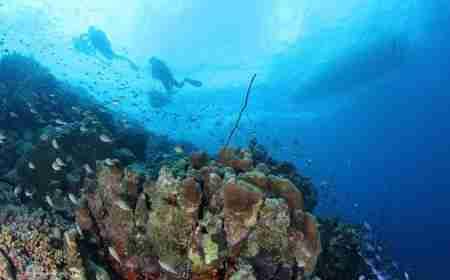 Curacao Dive Site Guide | Smokeys | Dive Curaçao