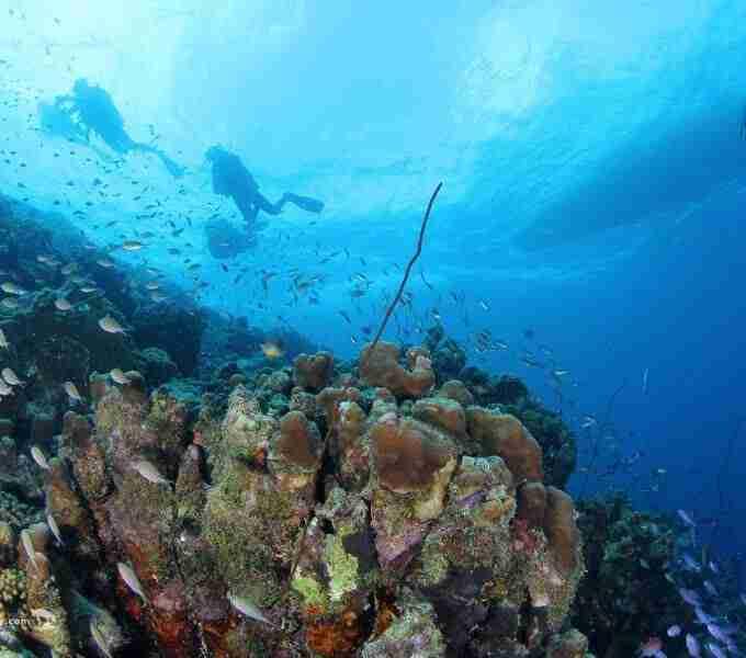 Curacao Dive Site Guide   Smokeys   Dive Curaçao