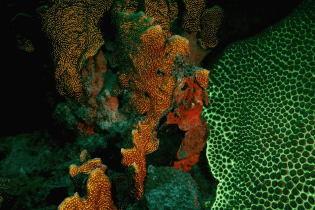 Fluorescent Night Diving in Curacao | Dive News Curaçao