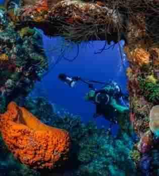 Curacao Dive Site Guide   Alice in Wonderland - Playa Kalki   Dive Curaçao