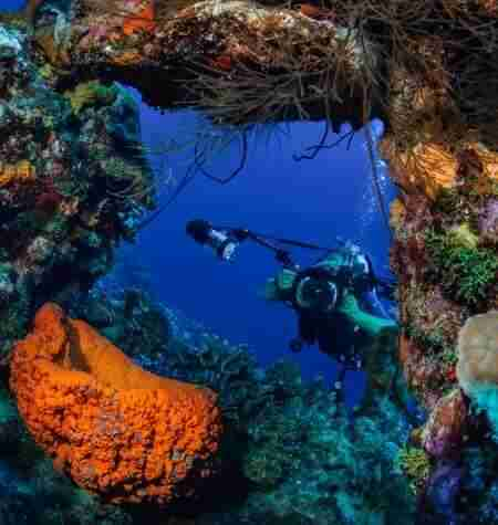 Curacao Dive Site Guide | Alice in Wonderland - Playa Kalki | Dive Curaçao
