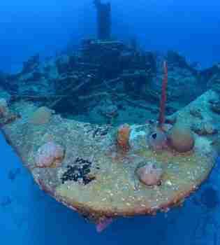 Superior Producer   Curaçao Dive Site Guide   Dive Travel Curacao